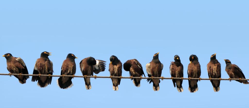 Birds-on-wire-edit